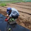 畑の作業大忙し!鬼怒川の河川敷にはミヤコクサが花盛り