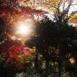 秋のひかり。