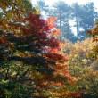 極楽寺山の紅葉は綺麗さ無し。