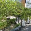 10月の赤坂インターシティAIR:敷地北側とオフィス入口(六本木通り)周辺 PART4