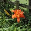 国蝶オオムラサキの季節