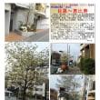 花巡り 「花水木-234」 目黒~恵比寿