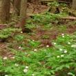 京都美山・芦生の森を訪ねて(3)