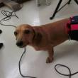 昨日の【ALOHA塾】は未病ケアの《ドッグスキャン》♫ 犬のしつけ教室@アロハドギー