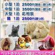 トリミング/ペットホテル予約受付中/ペットショップ/犬/猫/塩釜市/多賀城市/利府町/松島町