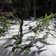 雪の上高地 復路