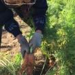 秋の味覚 芋掘りに出掛けました♬