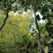 初秋の山 原生林の微かに色づき秋の花たちの喜びの声を聞きて歩く