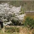 日本茅葺紀行 NO,442 桜のある風景