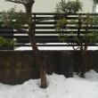 豪雪の爪跡
