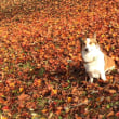秋 キャンプ 蒜山