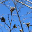社日(春)