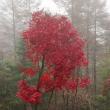 柳沢峠の紅葉散策