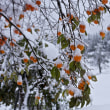 初雪やずぶりずぶりと足埋まる