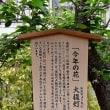 造幣局 桜の通り抜け 2018