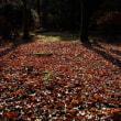 晩秋の万博公園をぶらり