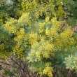 黄色は春の色~❤  (小さなキルト)