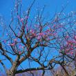 春近し散策途上で