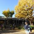 いちょう並木 明治神宮外苑(7)新宿区