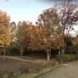 たまプラーザ団地の紅葉