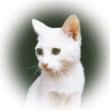 放置されてるグラフィックソフト~PhotoPad