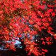 秋の京都旅行