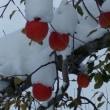ドサッと!大雪となりました。