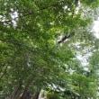 玉川上水の名残の緑