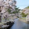 桜 -12-