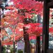 寂光院の紅葉