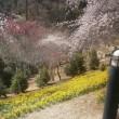 たまには梅の花を愛でたり、栗豚クンに遭遇したりして・・・
