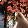 2017年鎌北湖の紅葉(ポンと一緒に)
