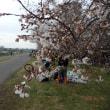 2018 東京の桜満開