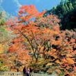 別府峡と轟の滝の紅葉三昧(香美市物部2017年11月12日)