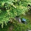 真竹のシーズン/母の日の後