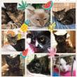 8月19日 猫の里親会のお知らせ