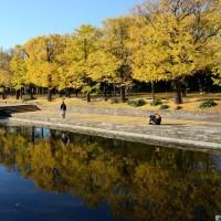 昭和記念公園 イチョウ並木・・2