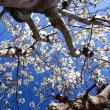 ◆旬の春花 (^O^)/~~♪