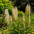 名古屋市千種区の東山植物園ではナンバンギセルが咲き出しました