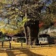 引き明けの森に紅葉を訪ねる+筒賀の大銀杏