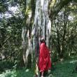 マサイママの聖書(デュポトの森)