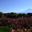 大石公園から晩秋の富士山~河口湖