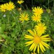 海の中道海浜公園に咲く季節の花々  2018年5月12日