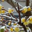 今年は記録的な寒い冬だった?