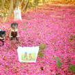 2017年の山茶花絨毯