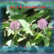 『 鳴動し草の根生まる台風過 』平和の砦575交心zsp2302