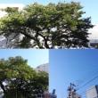 10月18日(木)今日の北川桜