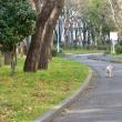 いつもの散歩道・・・(^^♪