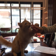 箕面と猫と日本酒