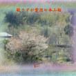 『 殺さずが愛国の本山桜 』平和の砦575交心zrw1411